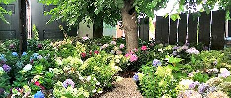 Realizzazione giardini e vivaio a brescia lago di garda for Immagini di giardini